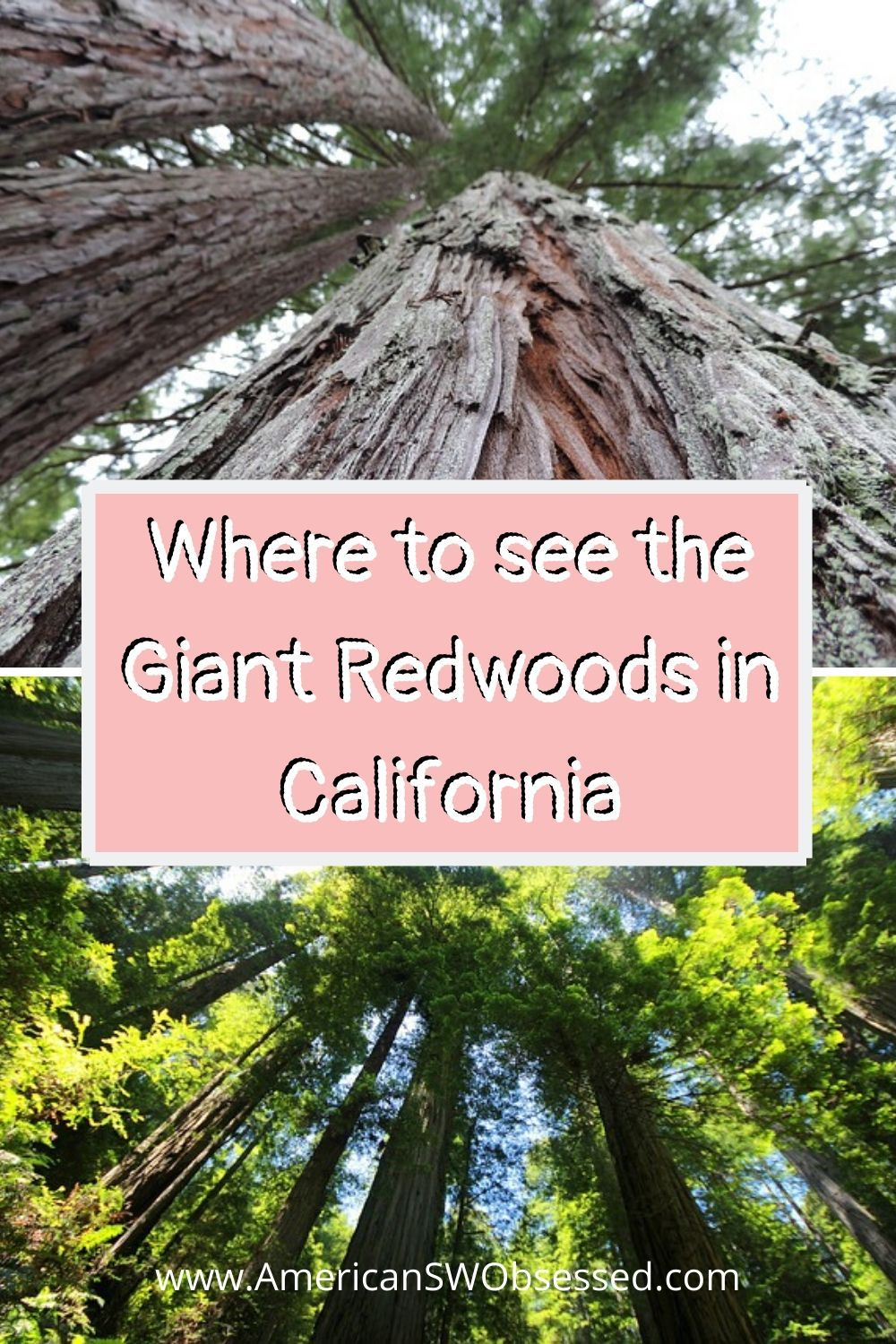 Wondering where to see the redwoods? This list is of the best redwoods in southern California.  You're sure to find out where to see redwoods in #California #traveltips