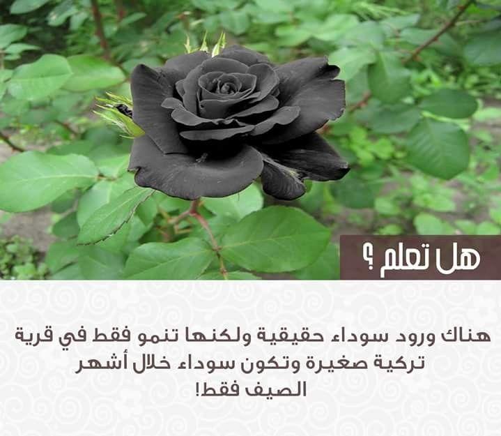 هل تعلم Cool Words Arabic Love Quotes Beautiful Nature