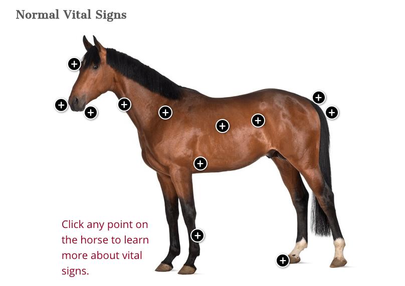Normal Vital Signs and Health Indicators Normal vital
