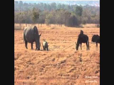 Little Rhino truly has a Great Heart