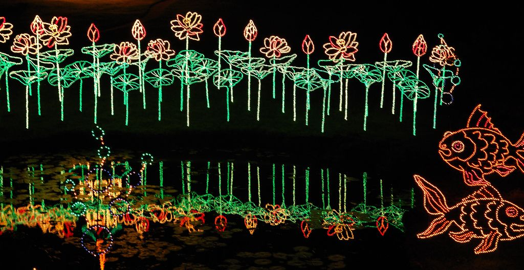 All sizes   Reflection of lotus lights on a pond at Bellingrath ...