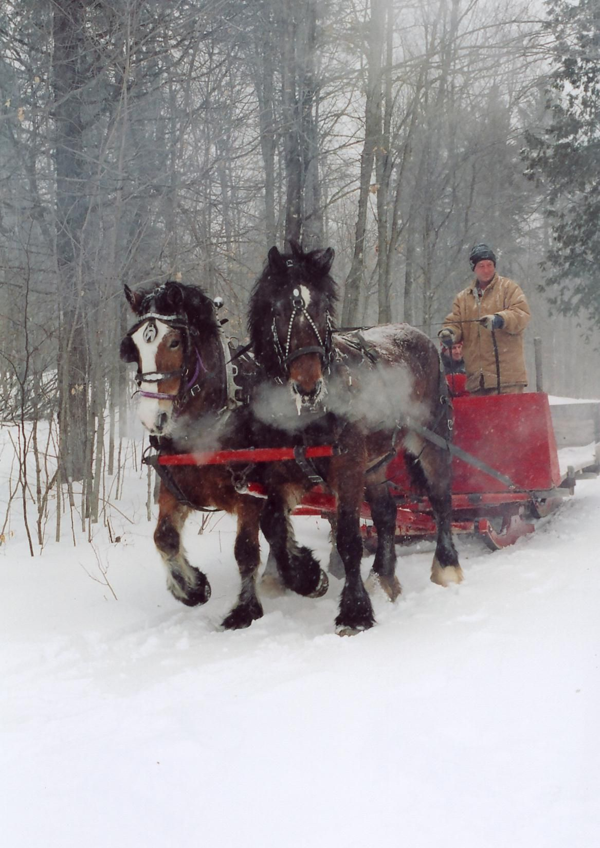 VINTAGE CHRISTMAS CARD Old Fashioned Horse Drawn Sleigh ... |Horse Drawn Sleigh Rides Christmas