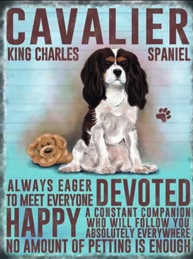 Cavalier 3 In 2020 Cavalier King Charles Spaniel Tricolor King Charles Dog Cavalier King Charles Dog