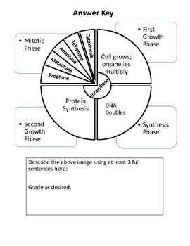 Cell Cycle Graphic Organizer Cell Cycle Graphic