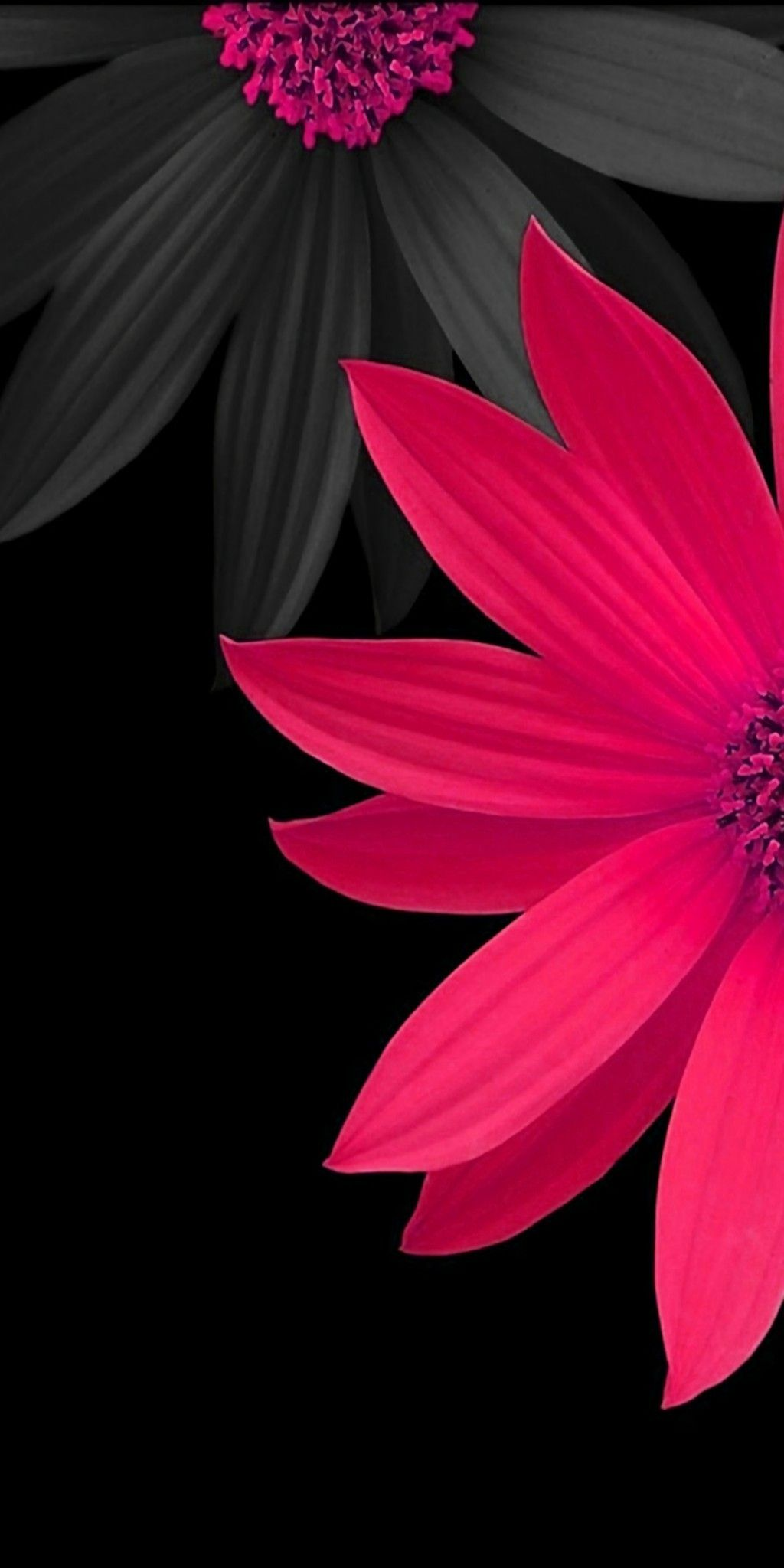 Pink and Black 3D Flowers Wallpaper Latar belakang