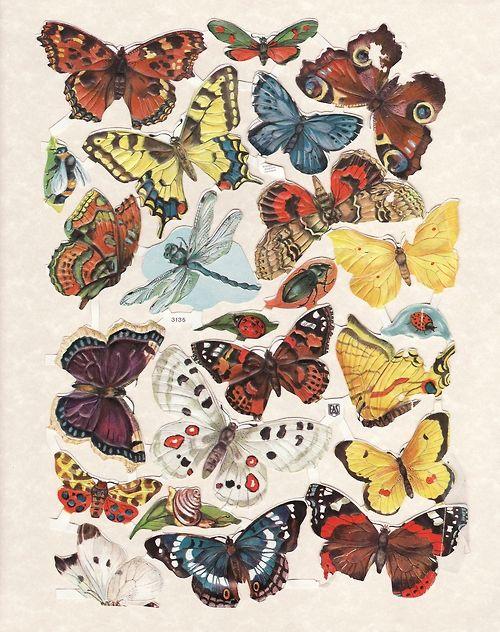 elranchonotsogrande: Butterflies Insects. Vintage scrap ...