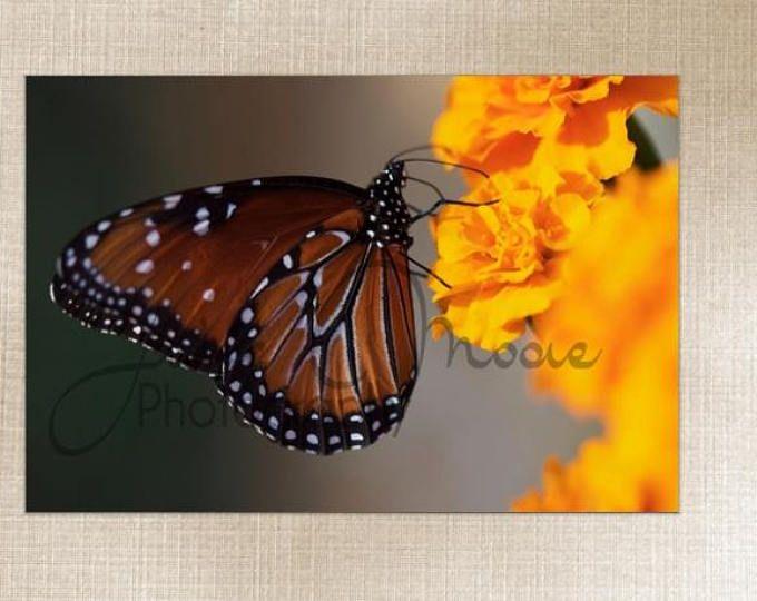 Texas Monarch Butterly Insect Macro - Large Wall Art Decor - Fine Art Photography Canvas Gallery Wrap - Orange, black, garden, Nature, Texas
