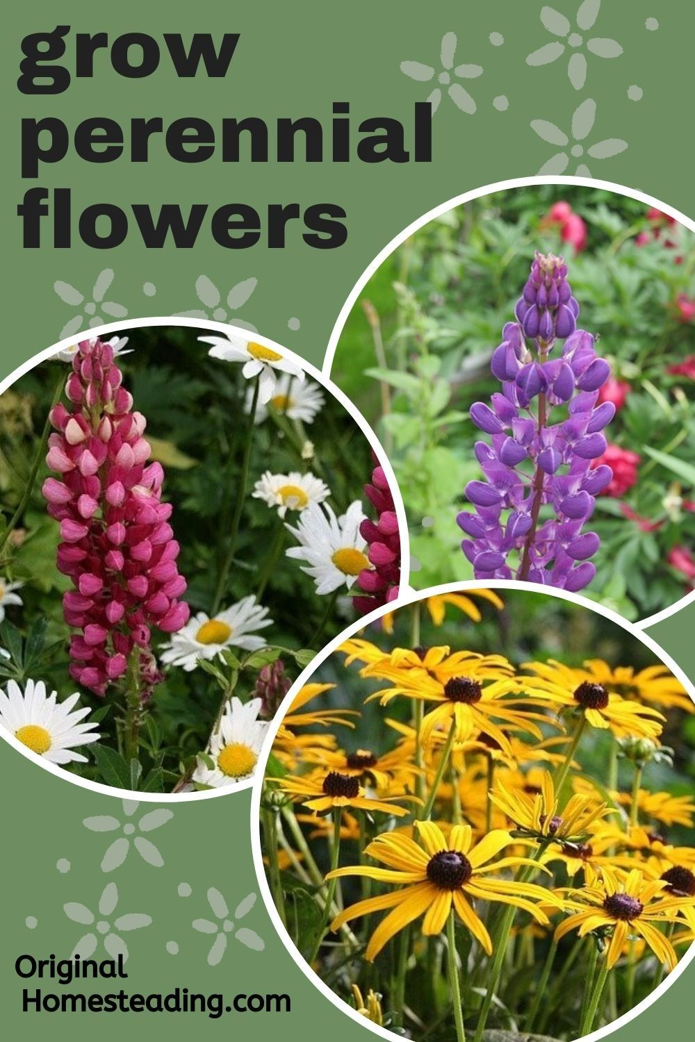 How To Grow Perennial Plants For Years Of Enjoyment In 2020 Flowers Perennials Perennial Plants Garden Flowers Perennials