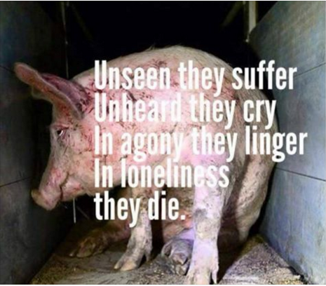 the misery we inflict on animals is an abomination; unseen they suffer, unheard they cry, in agony they linger and in loneliness they die