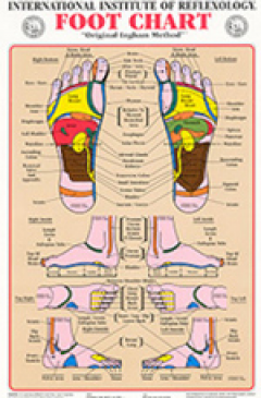 graphic regarding Printable Reflexology Foot Chart referred to as First Ingham Treatment Foot Wall Chart (A1) Reflexology