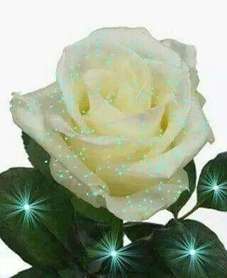 Pin De Regina Riofrio En Las Mejores Rosas Rosas Flores Y Tesoros Celestiales