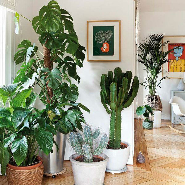 What is the Best Placement of Plants for Good Feng Shui? - Feng Shui Tips, Products and Services -   16 plants Office feng shui ideas