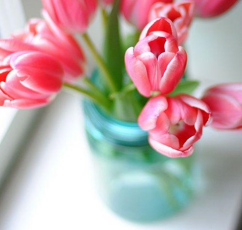 Pin von رغــــــد auf & flower & | Pinterest