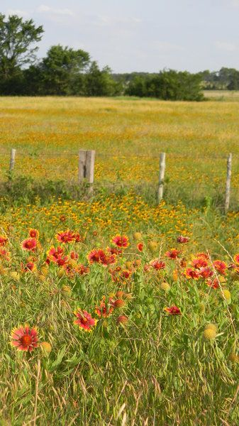 Fence Post And Blanket Flowers And Black Eyed Susans Somewhere Between Waco And Mexia Texas Texas Scenery Texas Gardening Wild Flowers