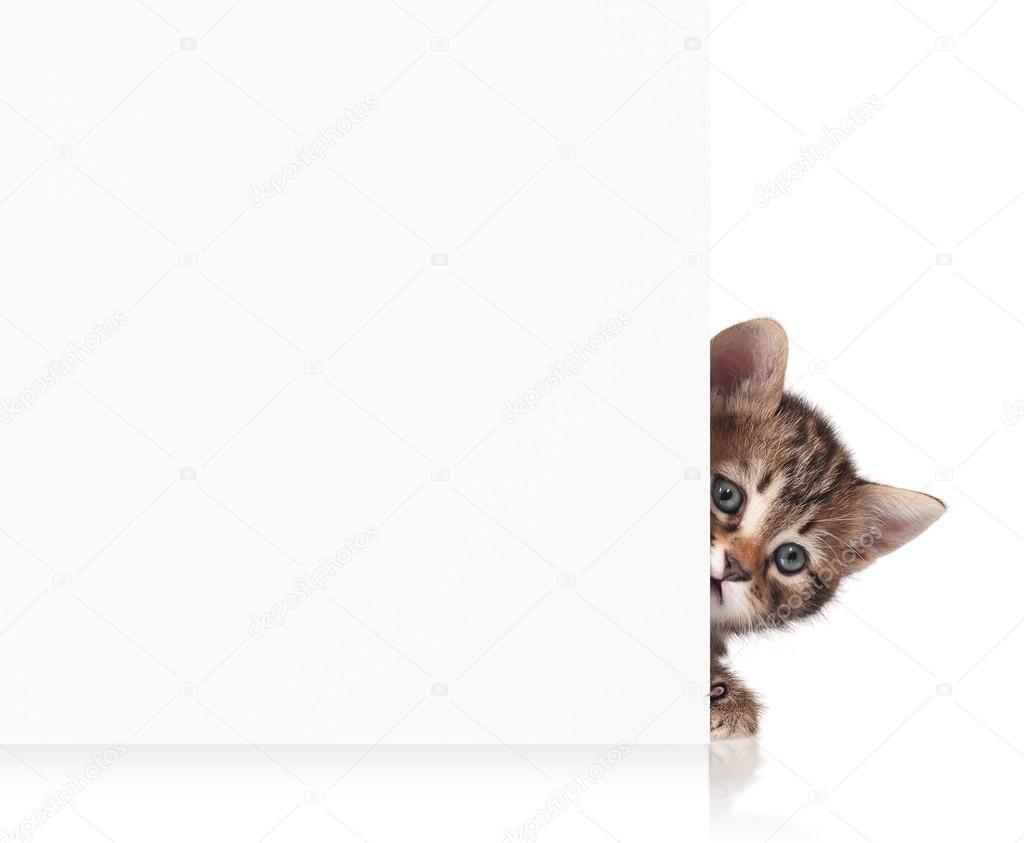 Cute Little Kitten Stock Photo Ad Kitten Cute Photo Stock Ad In 2020 Cute Little Kittens Little Kittens Kittens