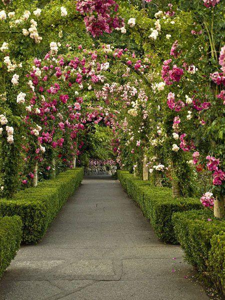 Allée de jardin bordée de buis et surplombée d\'arches fleuries ...