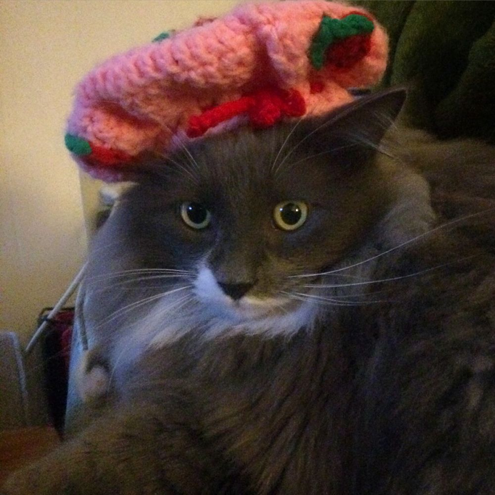 Maybe we need to start selling #CrochetedHats!? Our #24HourTees #Team #Kitty might disagree! #Caterday