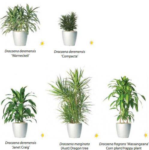 indoor Houseplants   Indoor House Plant Species   Happy National ...