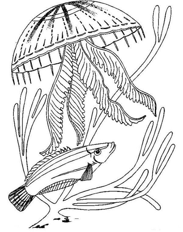 Detailed Jellyfish Realistic Coloring Page To Print For Free
