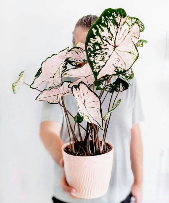 Prenez soin de vos plantes d'intérieur facilement et comme un pro ! Créez votre jungle indoor :). @plants1990 #plante #nature #bonsai #kokedama #ikebana #jungle #indoor #foliageplants #foliage #plants