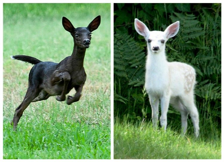 15 Times Nature Totally Dgaf Albino Animals Animals Melanistic Animals
