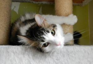 Adopt Muffin On Cat Adoption Adoption Cats