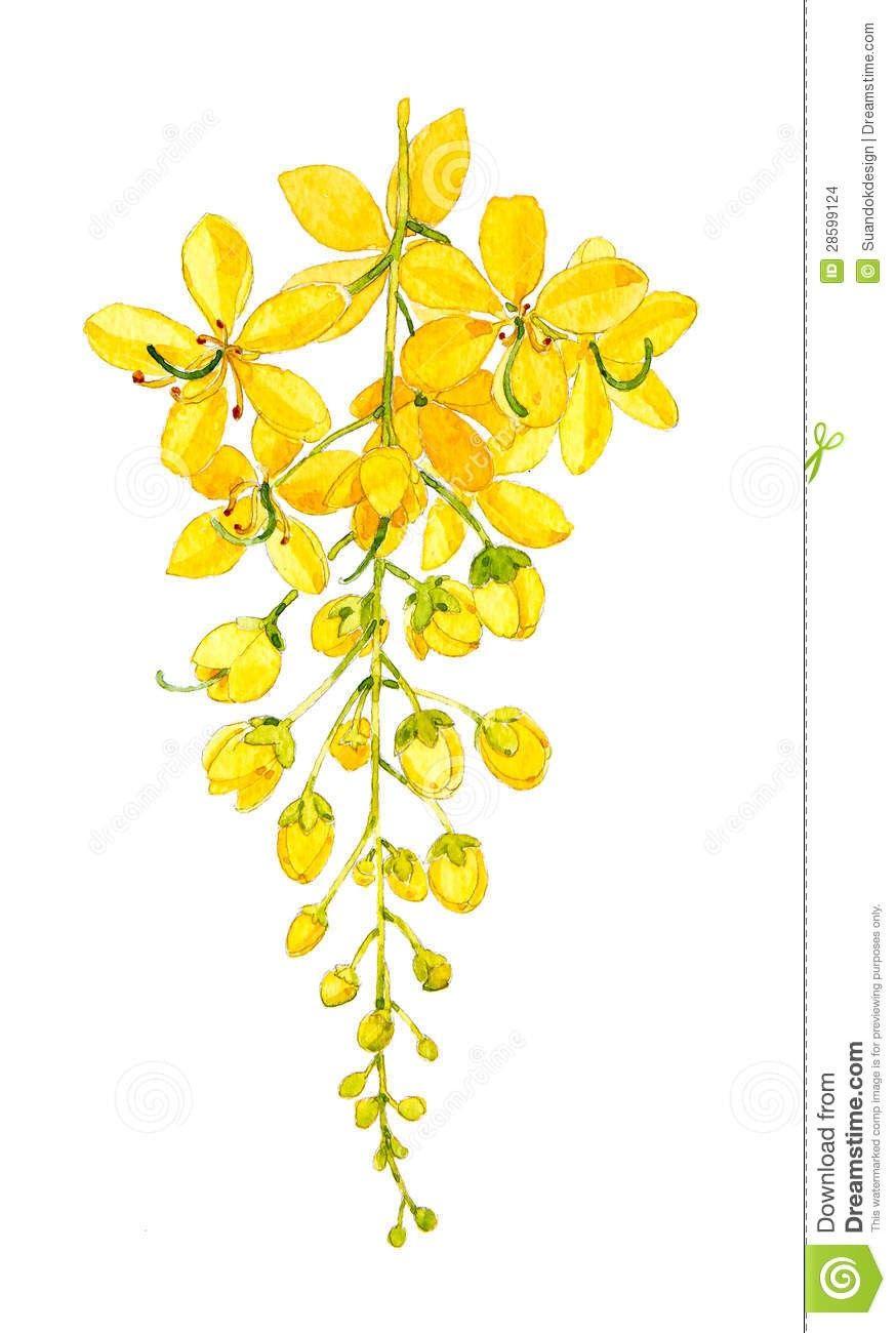 Golden Shower Tree Art Painting