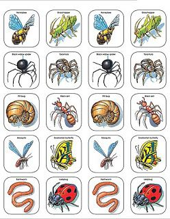 Imagenes Animales Para Recortar Imagenes Y Dibujos Para Imprimir Preschool Printables Insects Preschool Bugs And Insects