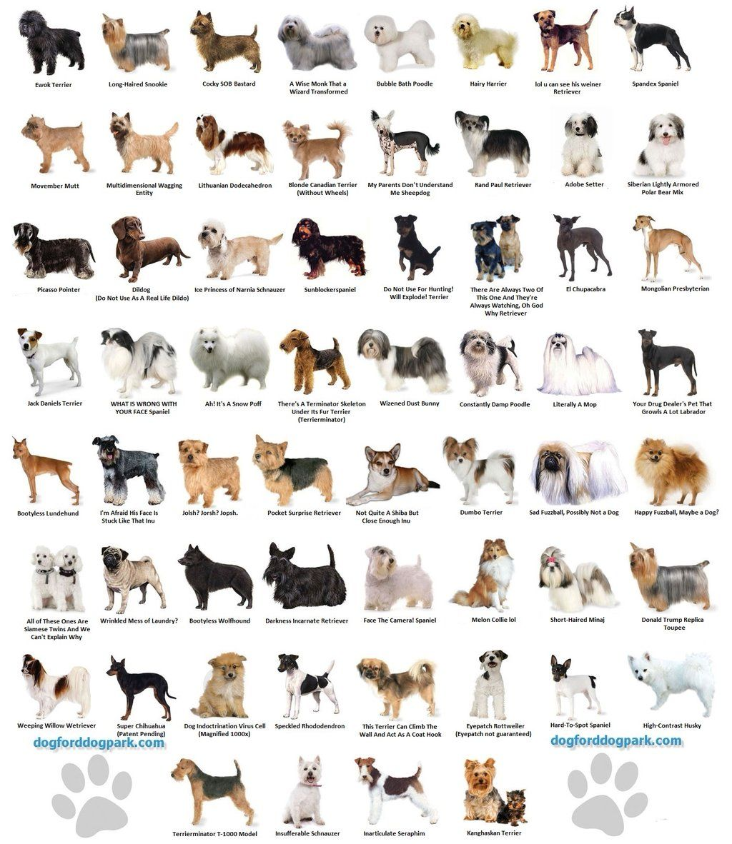 Weratedogs Dog Rates Dog Breeds Chart Small Dog Breeds Chart Best Dog Breeds