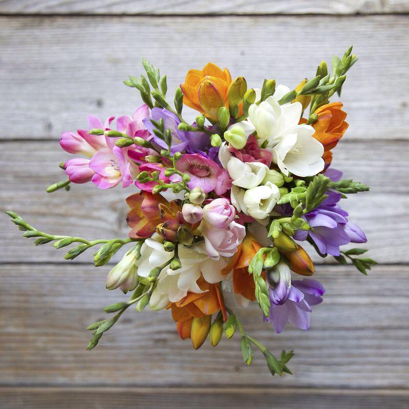 All Freesia Bouquet Flowers Delivered Flower Arrangements Flowers Bouquet