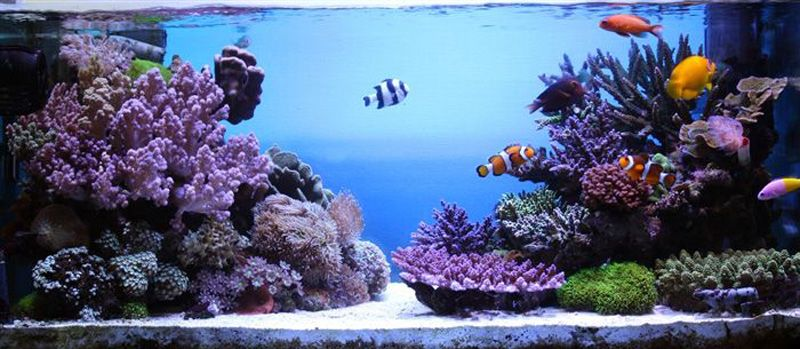 Nice On The Rocks | How To Build A Saltwater Aquarium Reefscape