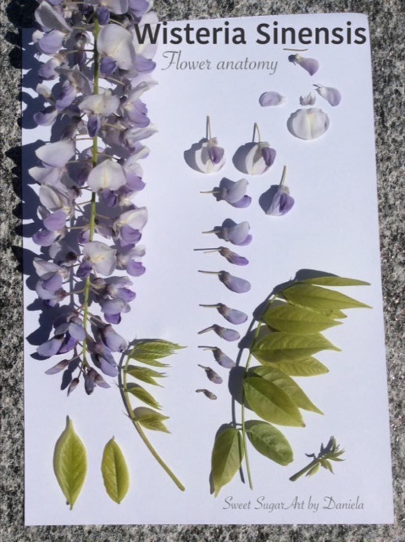 Wisteria From My Garden Sweet Sugarart By Daniela Flower Artists Handmade Flowers Flower Crafts