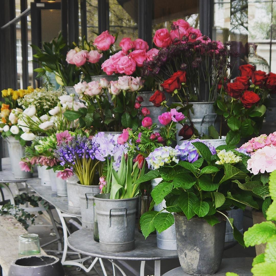 Beautiful flowers at nikkitibbleswildatheart and the scent is beautiful flowers at nikkitibbleswildatheart and the scent is incredible flowers flower izmirmasajfo Gallery