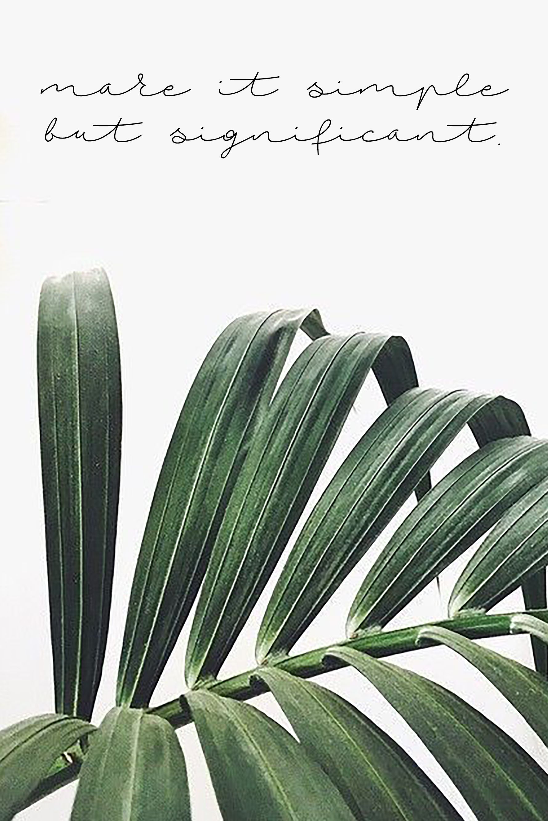 Pinterest Emmanbratcher Instagram Emma Nicole Vsco Emmabratcher Palm Plants Tropical