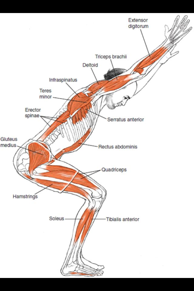 Layersofhappiness.com | Yoga asana | Pinterest | Yoga anatomie ...