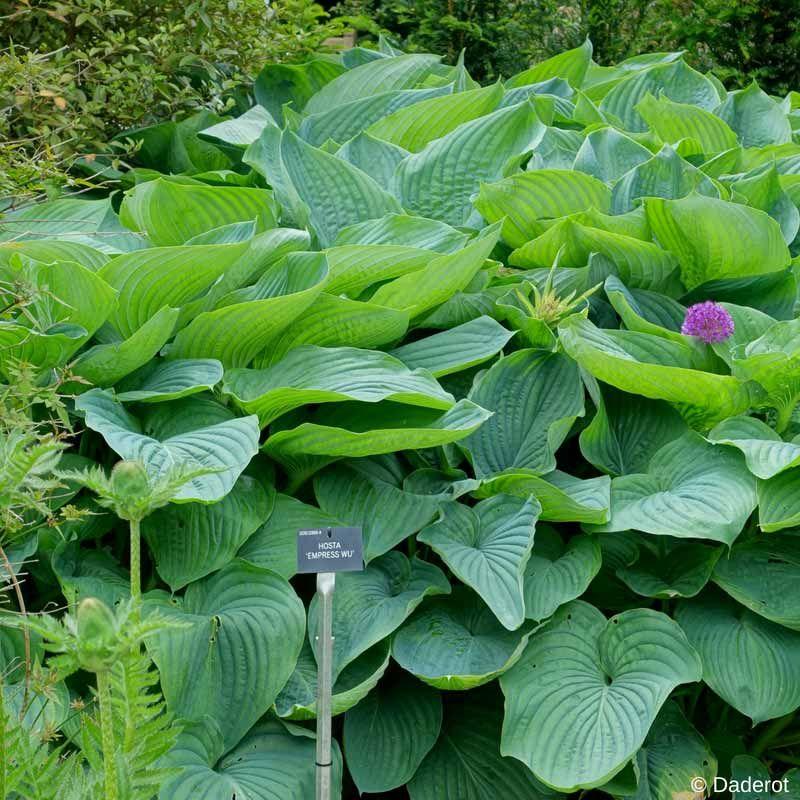 10 Plantes Exotiques Et Rustiques Pour Jardin Jungle Plante Exotique Jardin Rustique Jardin Exotique