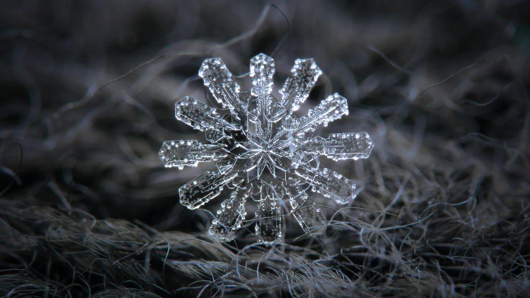 Snowflake Wallpaper Ultra Hd 4k Draft 3 Snowflakes Real Snow Crystal Snowflake Photography