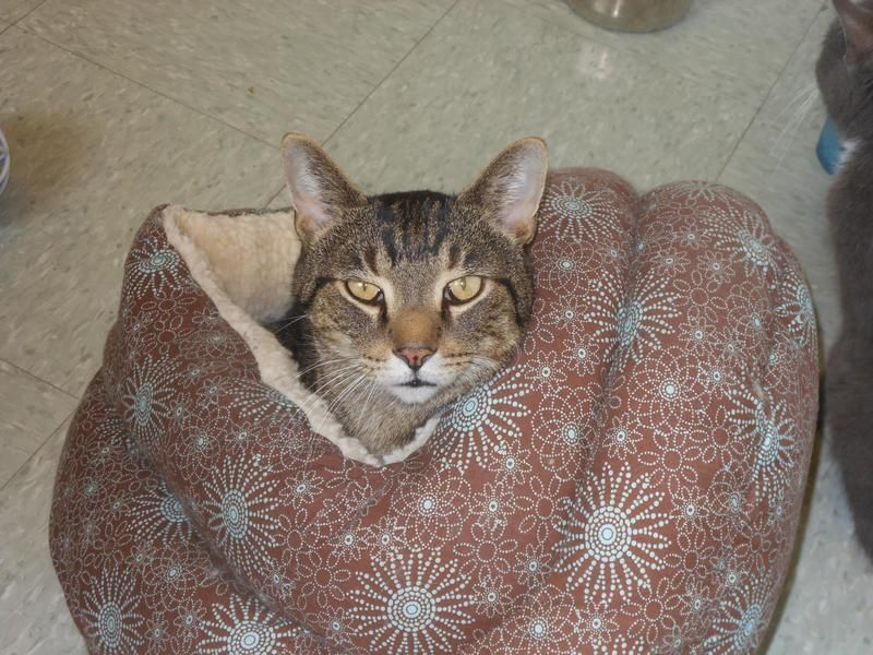 Adopt Jerico on Humane society, Shelter me, Cat rescue