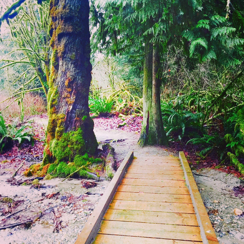 beautiful path on our hike in Washington