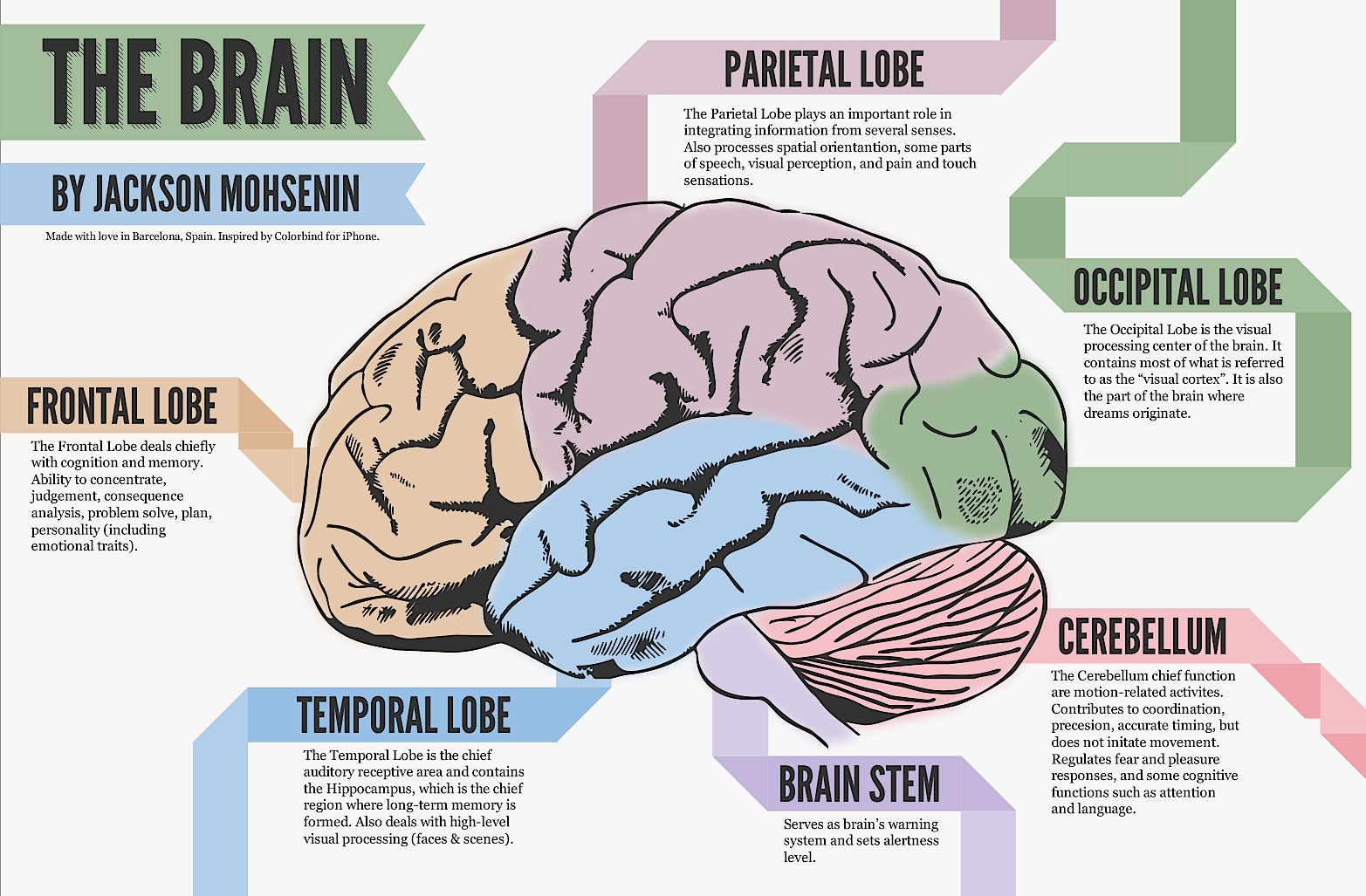 Image Result For Parts Of The Brain And Their Functions Chart