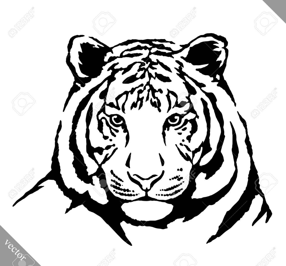 Black And White Engrave Ink Draw Tiger Vector Illustration Royalty Free Cliparts Vectors And Stock Illustration Image Tiger Drawing Tiger Vector Ink Drawing