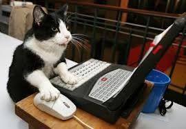 Multi tasking kitty