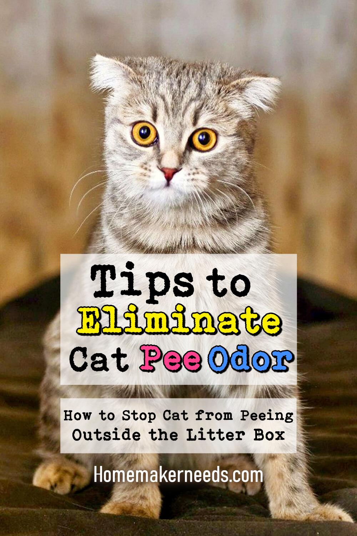 Tips To Eliminate Cat Odor
