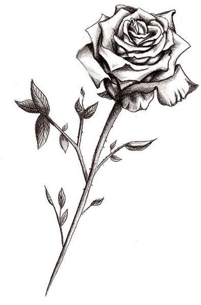 Rose Tattoo Designs The Body Is A Canvas Single Rose Tattoos Black Rose Tattoos Rose Stem Tattoo