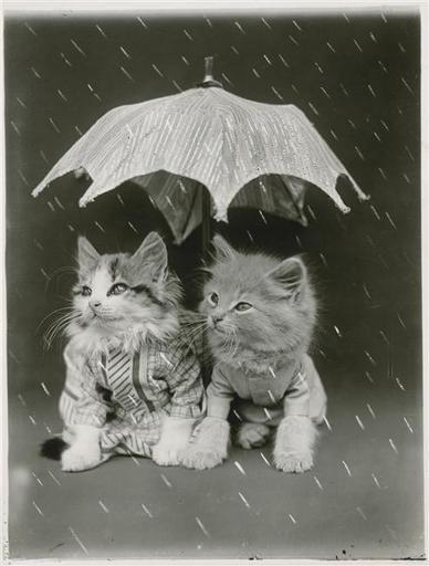 """Résultat de recherche d'images pour """"chaton pluie"""""""