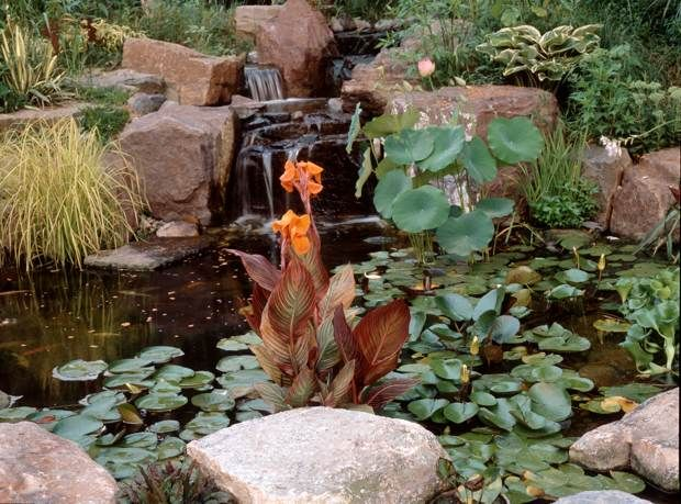Tropicanna Canna Adds Interest To This Pond Backyard Water Feature Water Features Plants