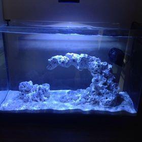 19L Pico Reef Tank. Aquascape Made By Ru0026R Aquascapes.