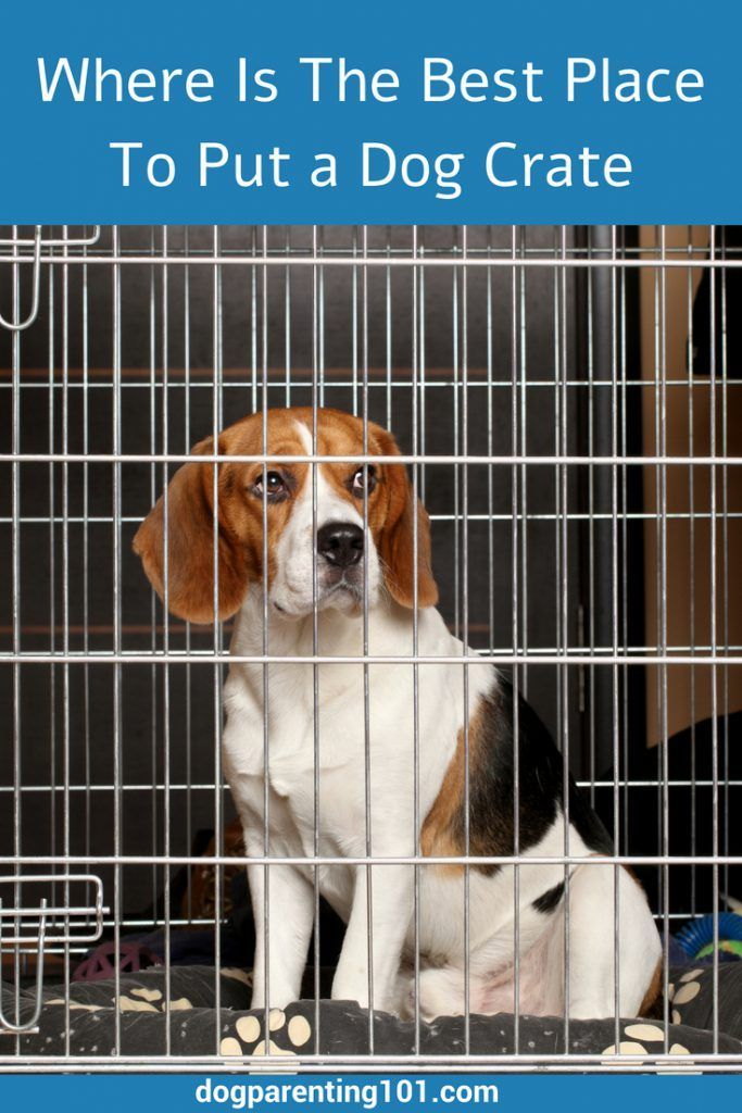 You've decided a crate is a great idea for your pup, but