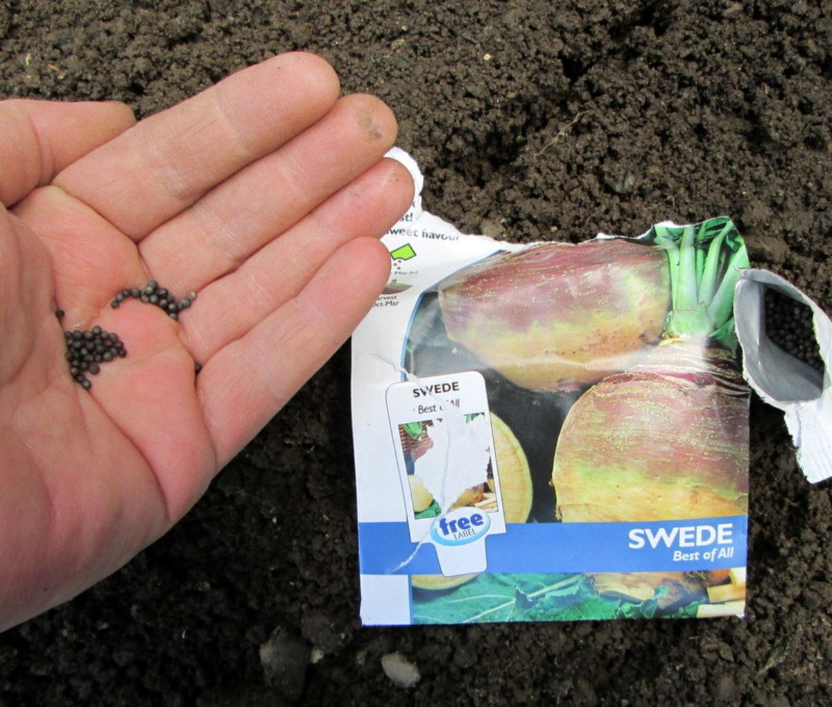 How To Grow Swede From Seeds In The Garden Seeds Garden Seeds Growing Vegetables
