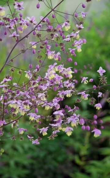 Photo of Rombos de pradera: flores de filigrana